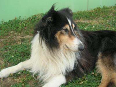 ZORRO (1998-2011)